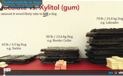 "Xylitol toxicity in dogs – a ""natural"" killer"