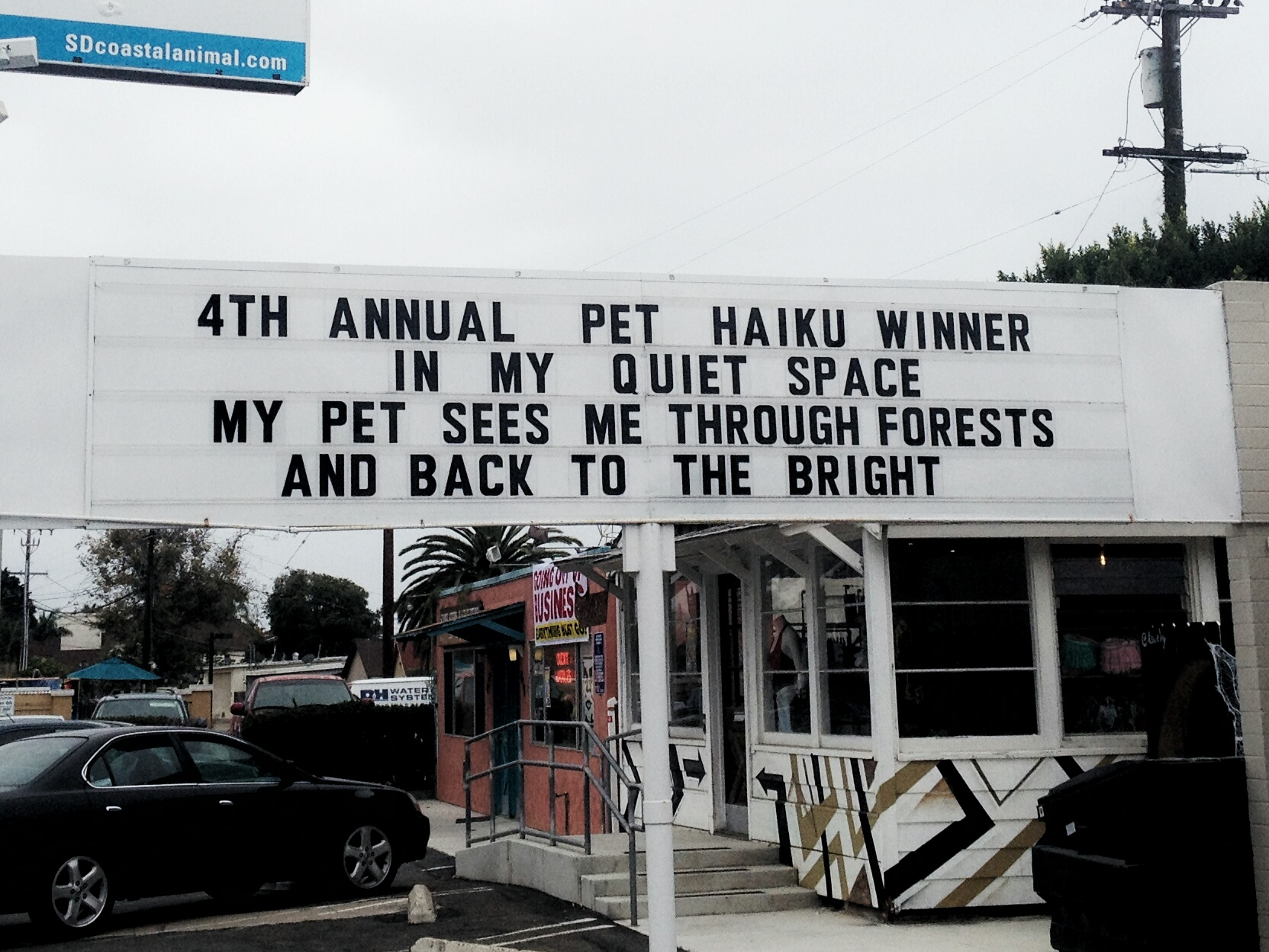 2016 Pet Haiku Quiet Space 01 Coastal Animal Hospital