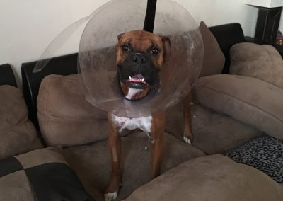 cone-of-shame-harbor