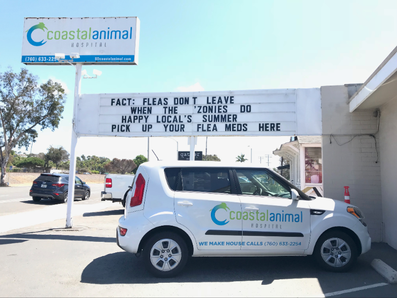 Zonies and fleas encinitas vet